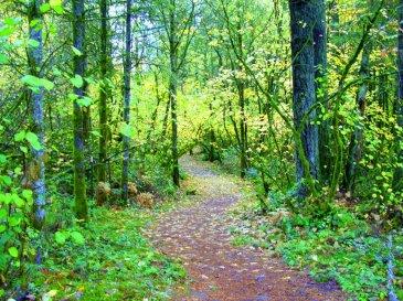 The quiet places we walk