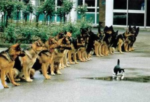 curiosity-killed-the-cat-curious