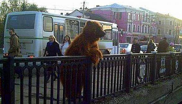 funny-bear