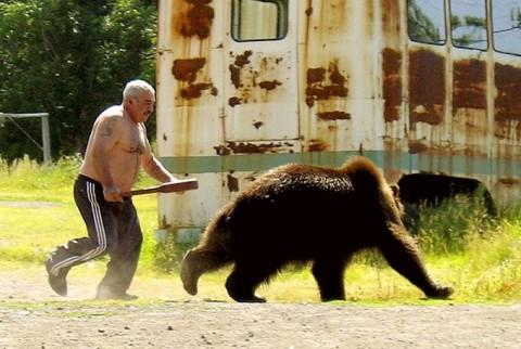 bear-480x322