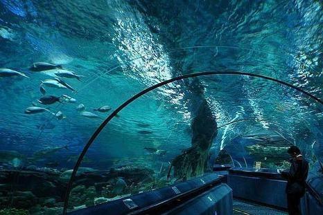 sochi_discovery_world_aquarium_1