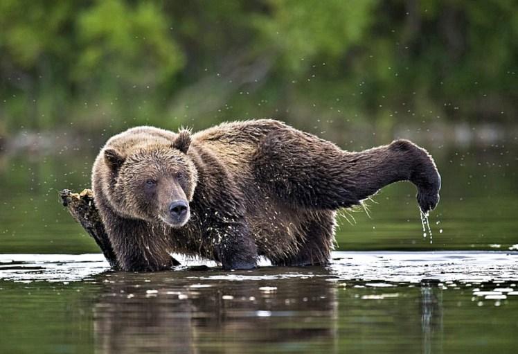 00a-bears-of-lake-kurilsk-kamchatka-15-11-12