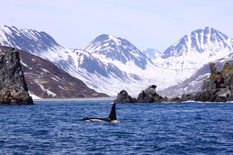 11.-Orca-scenery-Russia-FF