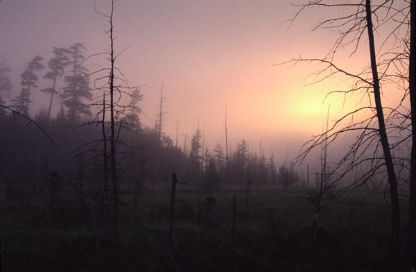 bog-dawn