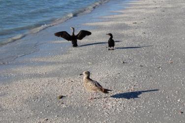 beach and birds small