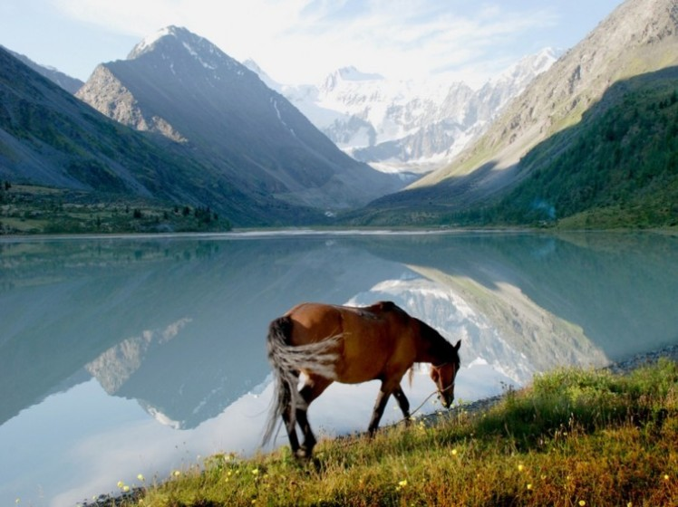 horse-near-mountain-lake-altai-russia-754x565
