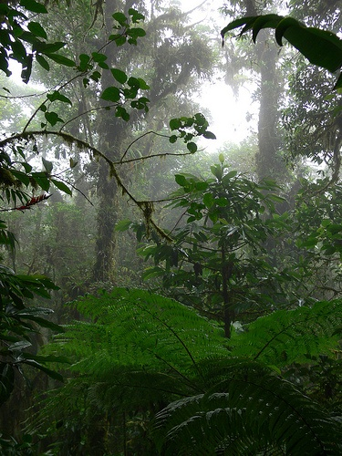 CR Cloud forest by ableimes