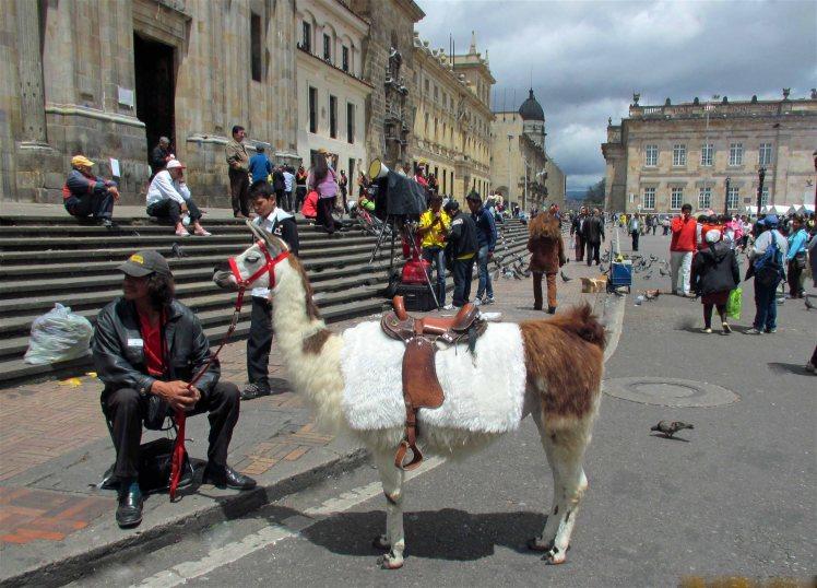 LLama in Bogota