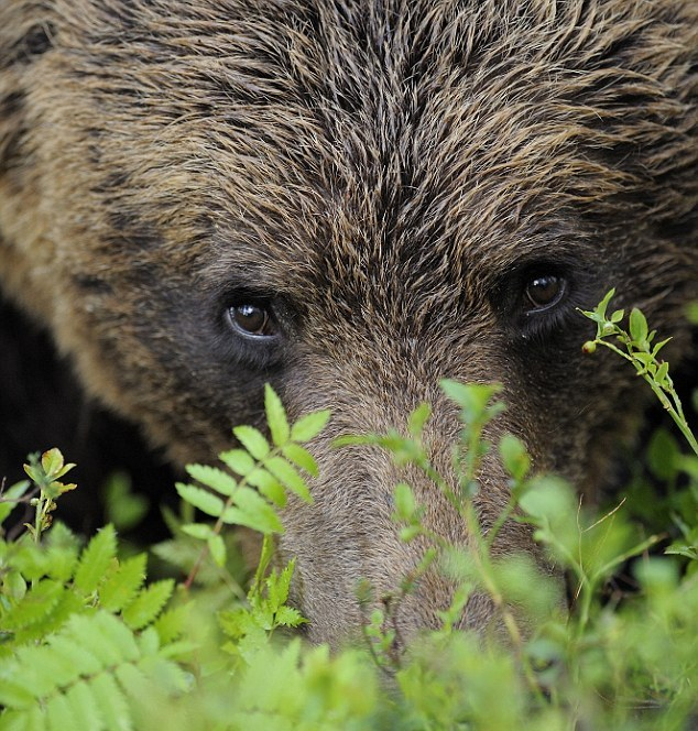 looking into the eyes of a bear