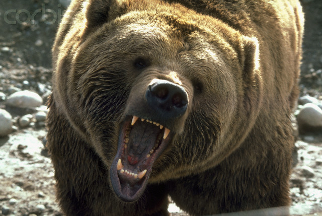 Top Ten most Dangerous Animals of Russia - Life in Russia