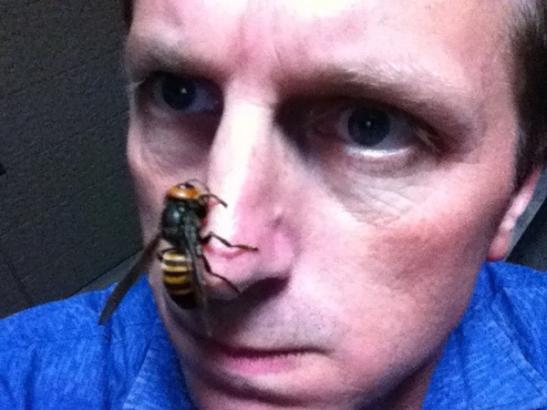 suzumebachi-asian-giant-hornet-04