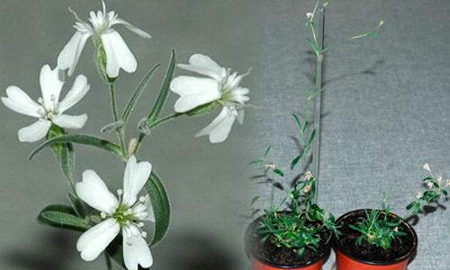 Frozen-Plant-500-x-300