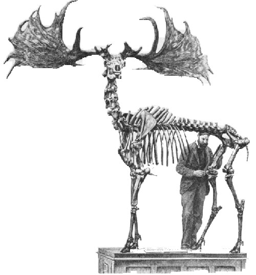 irish elk-2