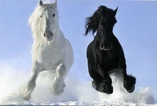 russian horses-1