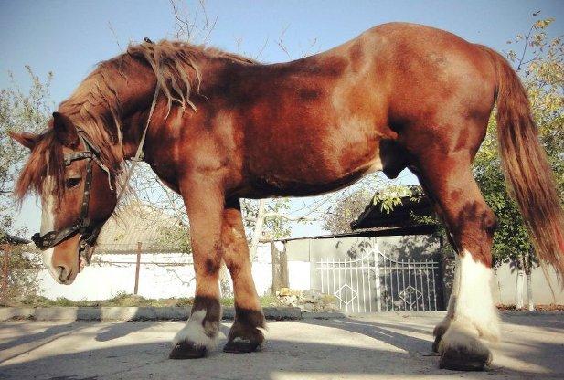 russian horses-2