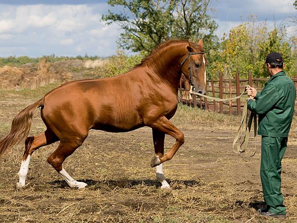 russian horses-3