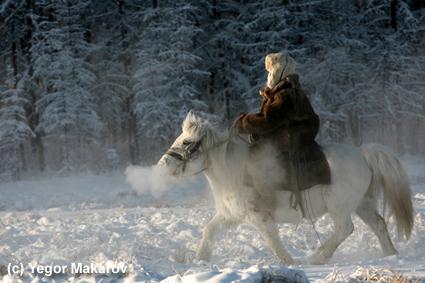russian horses-4
