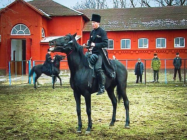 russian horses-6