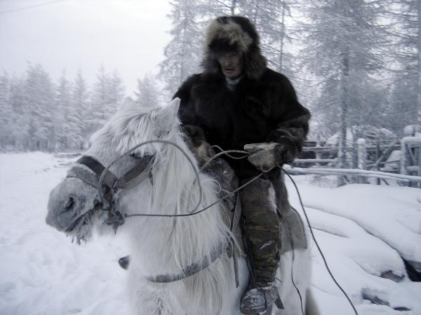 russian horses-8
