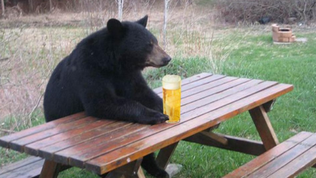 bear-with-beer-620x350