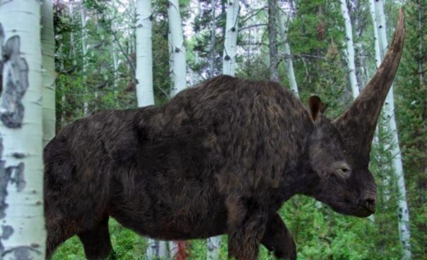 Elasmotherium, Philip72-Wikipedia