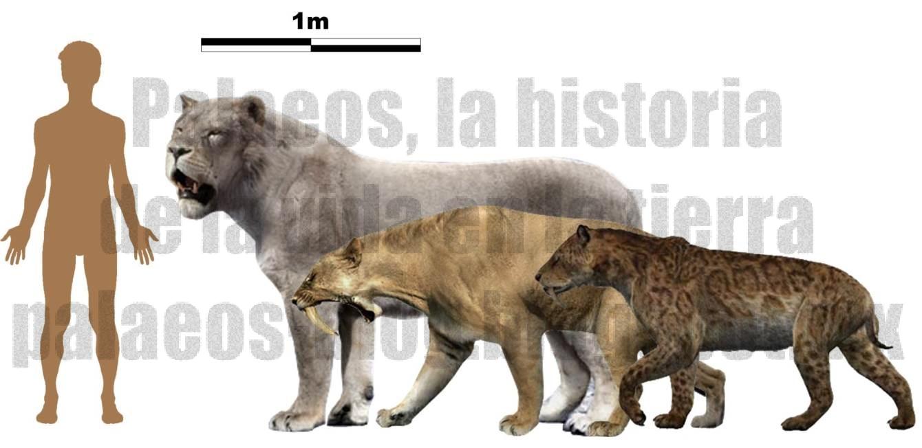 asian leopard cat predators