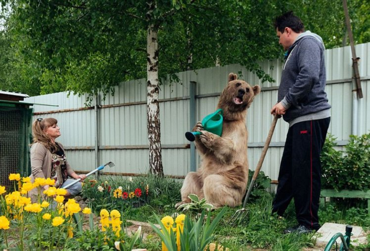 russian-couple-family-adopt-bear-stepan-amazing-weird-photo-10