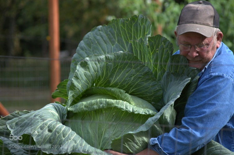 russian cabbage